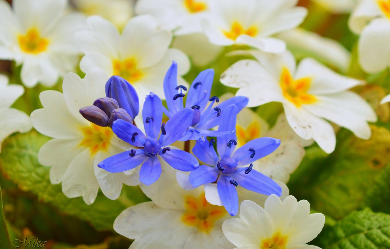 Photo wallpaper Flowers, Flowers, Flowers