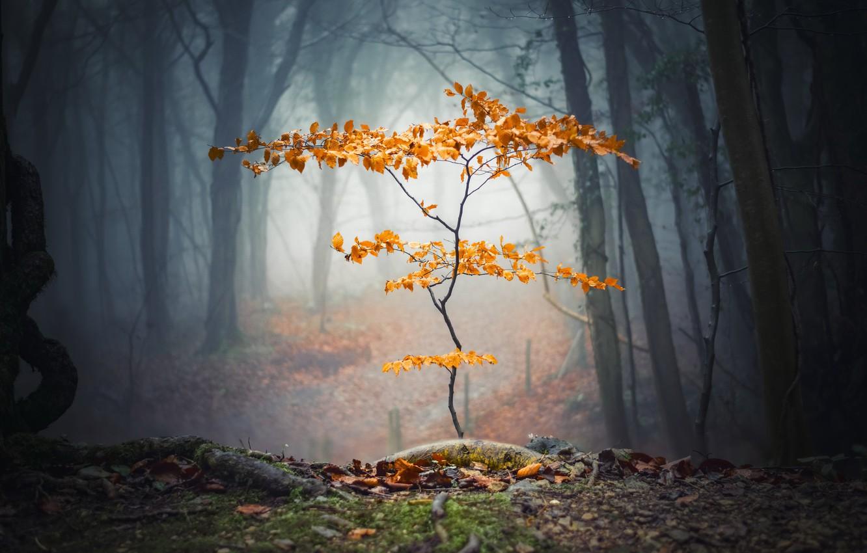 Photo wallpaper autumn, forest, tree