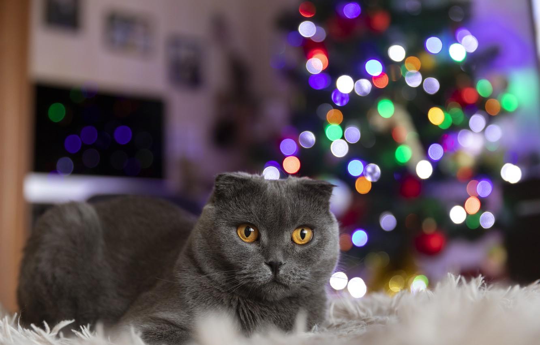 Photo wallpaper cat, new year, tree garland lights