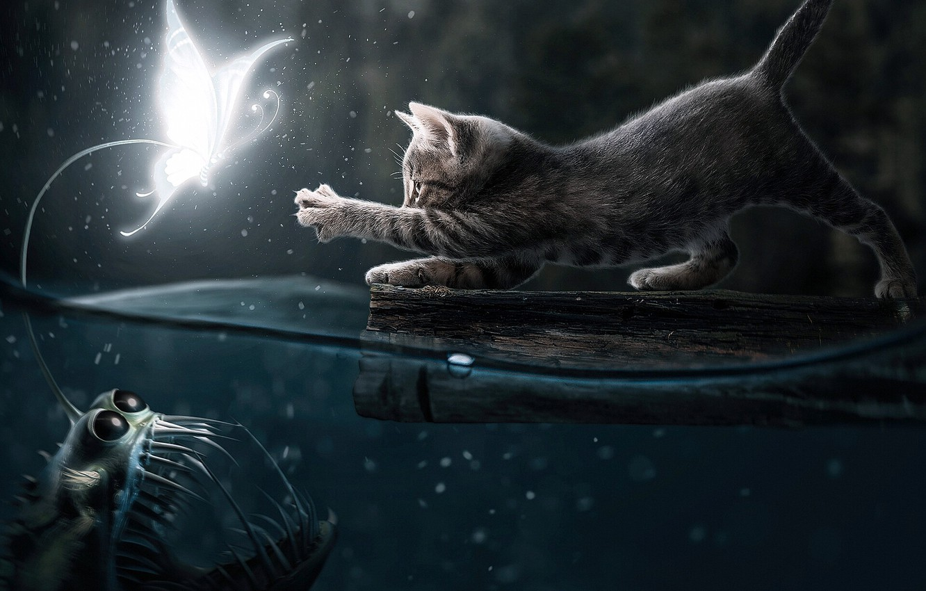Photo wallpaper Water, Night, Cat, Fish, Two, Pussy, Hunting