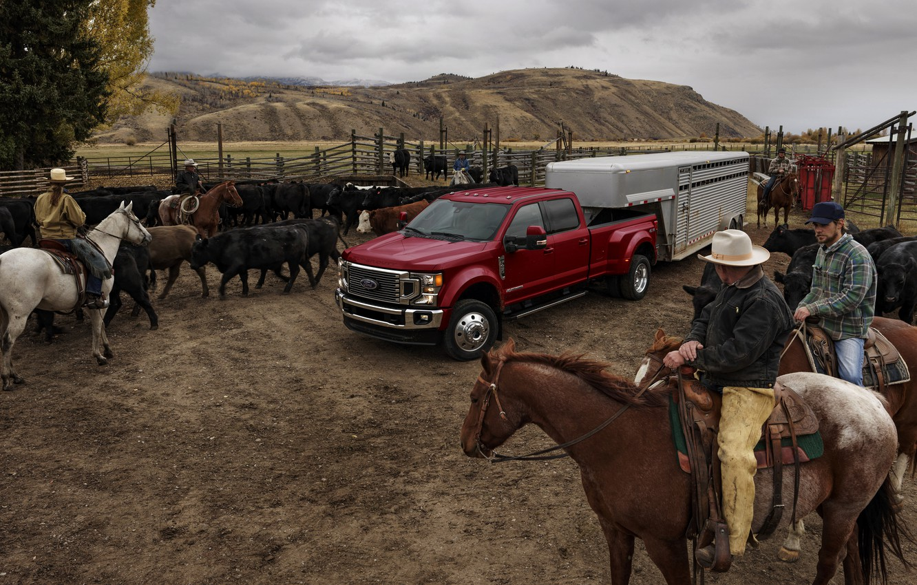 Photo wallpaper Ford, pickup, cattle, the herd, Super Duty, F-450, Limited, 2019, F-series