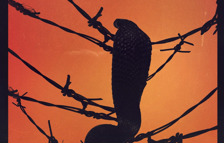 Photo wallpaper Music, Cobra, Cover, Monstercat, Tails & Juelz