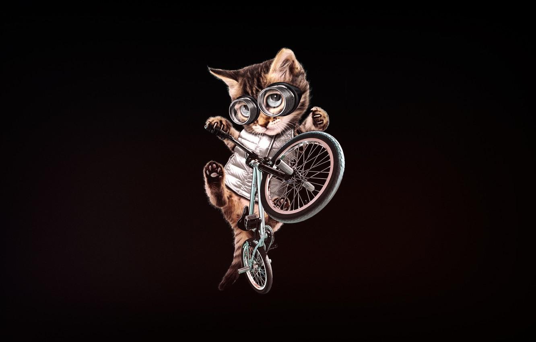 Photo wallpaper Minimalism, Kitty, Glasses, Cat, Style, Bike, Art, Art, BMX, Style, Kitty, Cat, Kitten, Bike, Minimalism