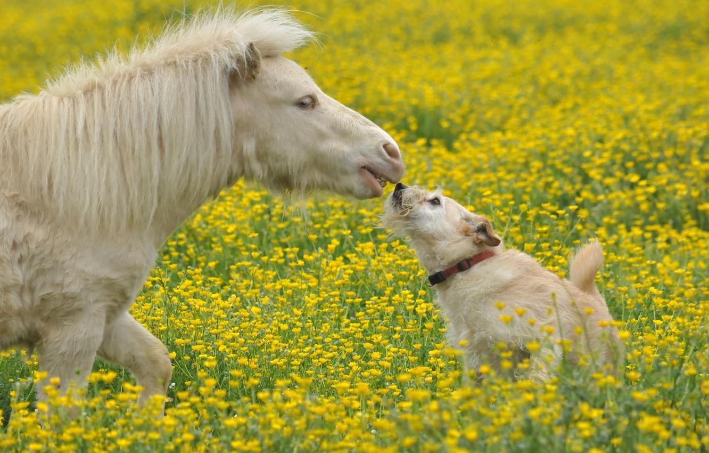 Photo wallpaper flowers, dog, meadow, pony, horse