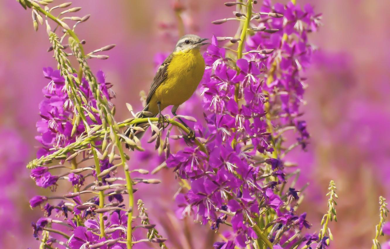 Wallpaper Grass Flowers Bird Plants Beak Pink Images