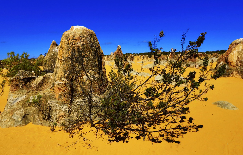 Photo wallpaper sand, stones, desert, plant, Australia, Pinnacles