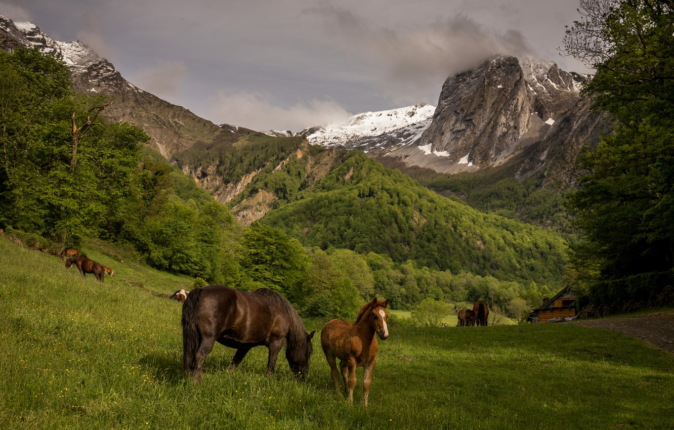 Photo wallpaper field, forest, the sky, grass, mountains, nature, glade, the slopes, tops, horses, horse, pasture, meadow, …