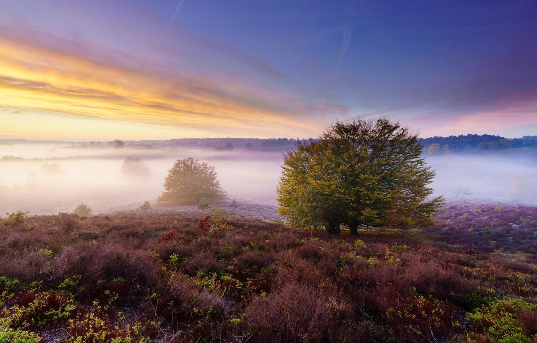 Photo wallpaper field, fog, shrub, Heather