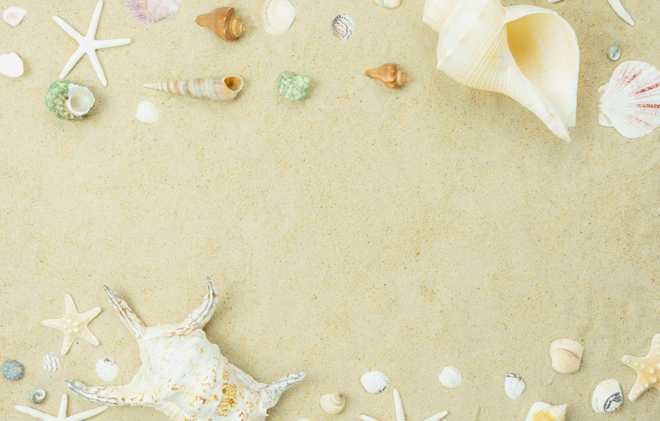 Photo wallpaper sand, beach, summer, shell, summer, beach, sea, sand, marine, seashells
