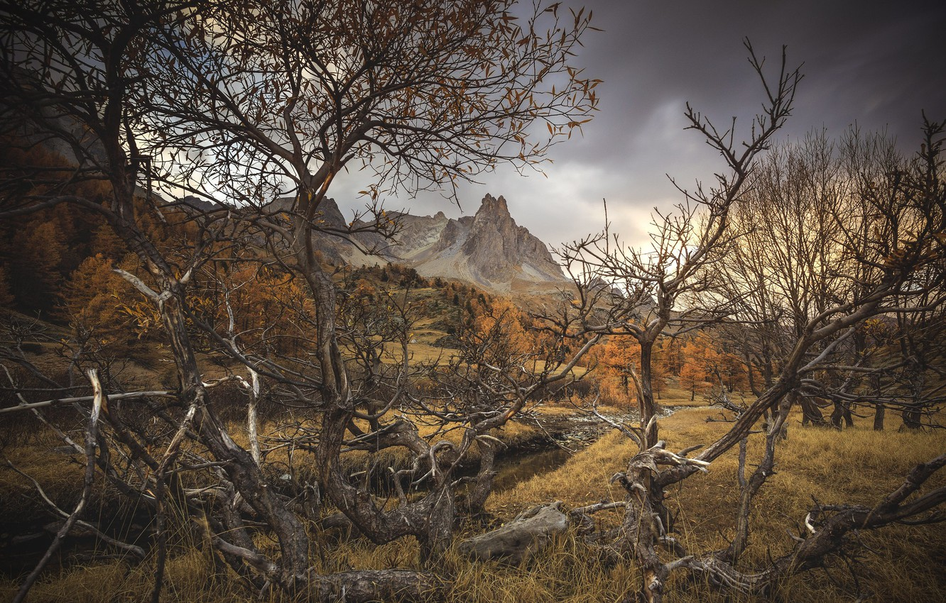 Photo wallpaper autumn, branches, dry tree