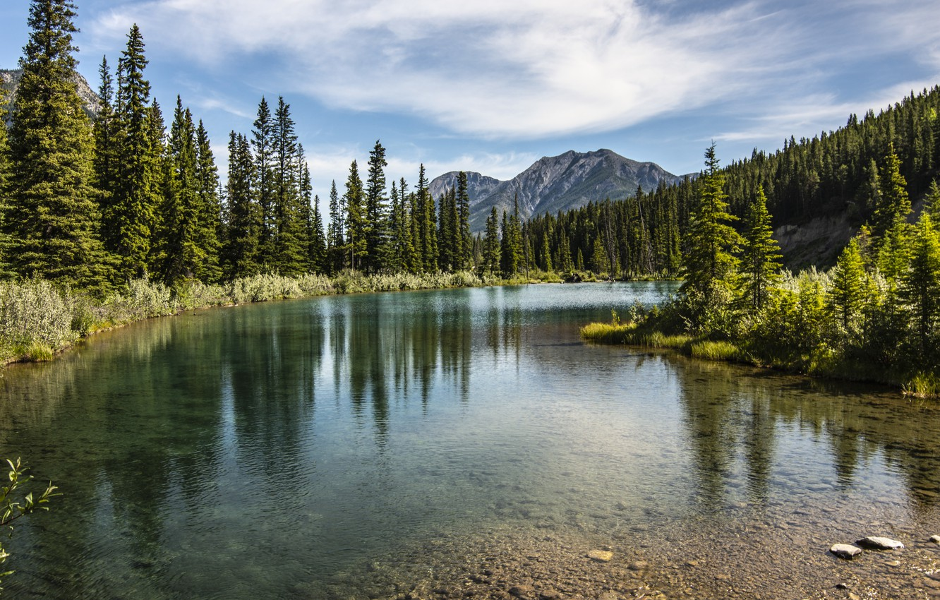 Photo wallpaper forest, trees, landscape, mountains, nature, lake
