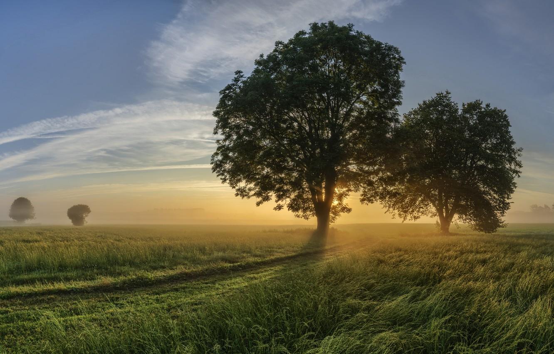 Photo wallpaper road, fog, tree, morning