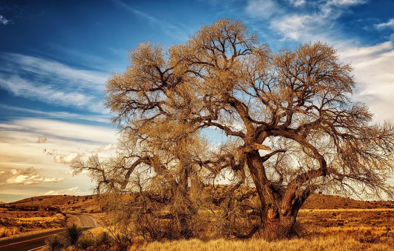 Photo wallpaper autumn, the sky, tree