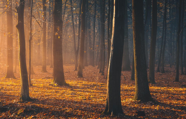 Photo wallpaper autumn, forest, light, light, forest, autumn, Tomczak Michael
