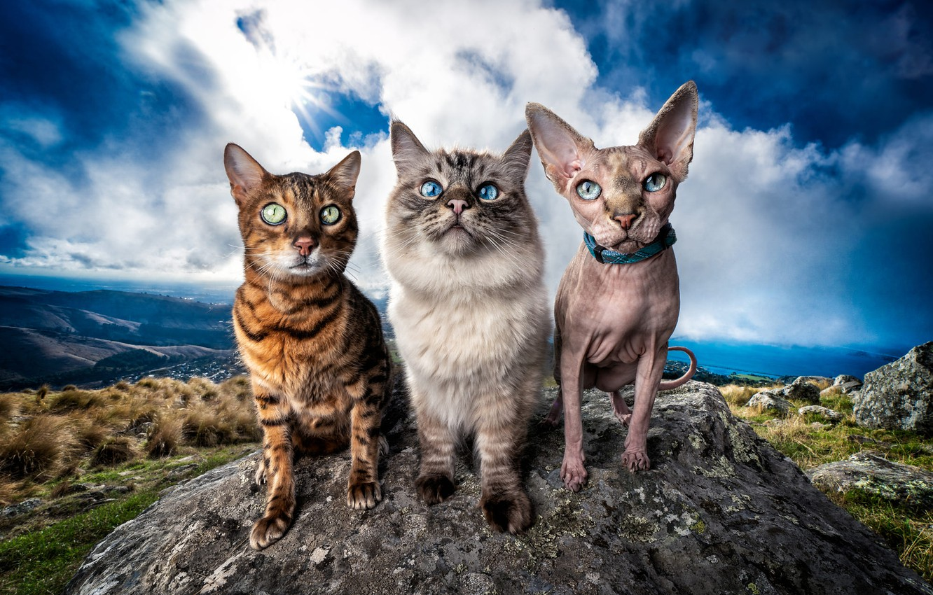 Photo wallpaper cat, the sky, cat, look, the sun, clouds, cats, landscape, mountains, nature, pose, blue, stones, …