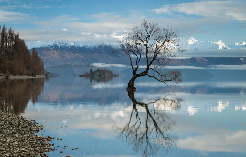 Photo wallpaper water, river, tree