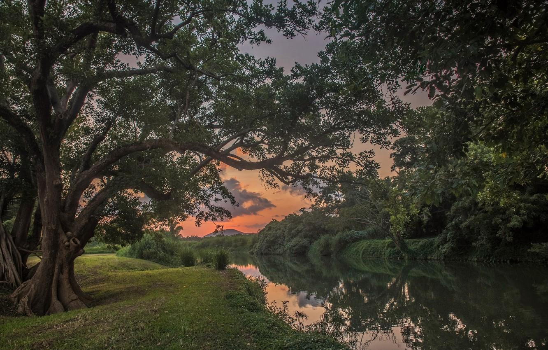 Photo wallpaper Sunset, Trees, River