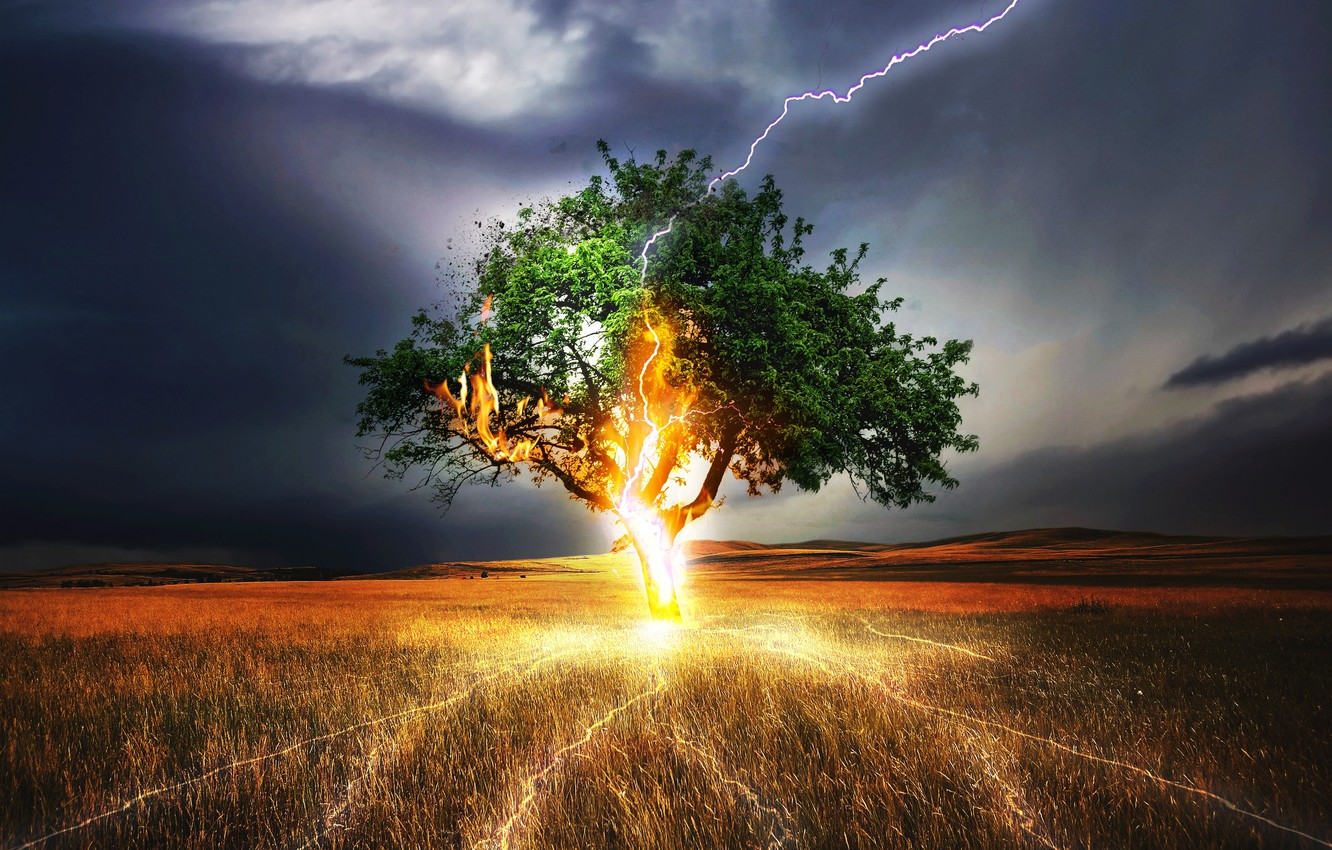 Photo wallpaper TREE, GRASS, The SKY, FIELD, CLOUDS, CATEGORY, LIGHTNING, The STORM