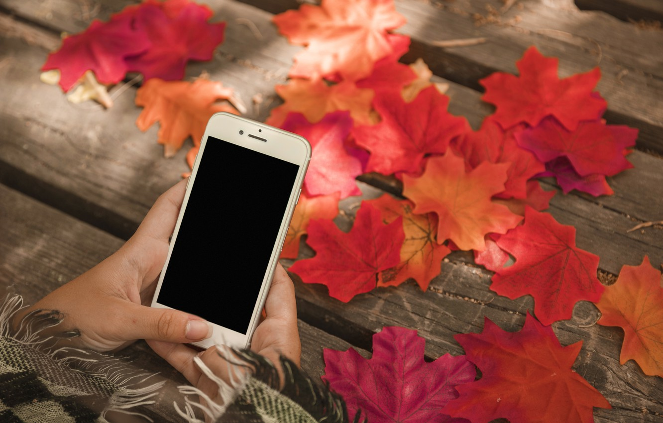 Photo wallpaper autumn, leaves, colorful, maple, wood, autumn, leaves, autumn, phone, maple