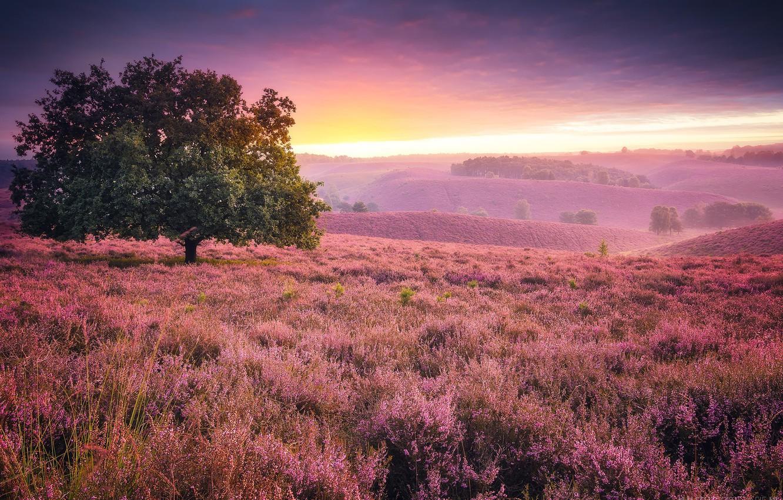 Photo wallpaper sunset, tree, meadow