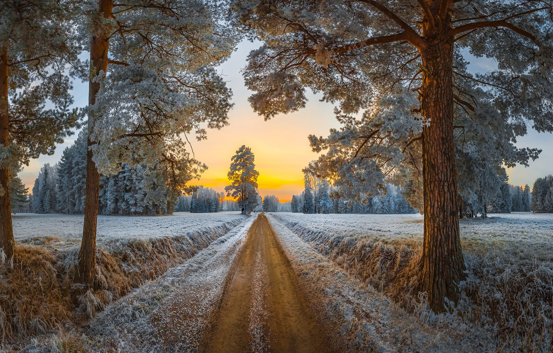 Photo wallpaper frost, road, trees, Park, dawn, morning, Saint Petersburg, pine, Russia, Pavlovsk, Pavlovsk Park, Fedor Lashkov