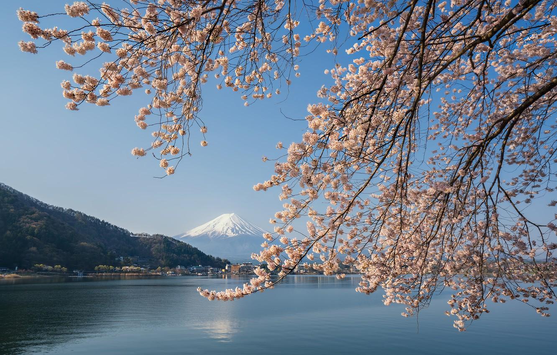 Photo wallpaper lake, spring, Japan, Sakura, mount Fuji