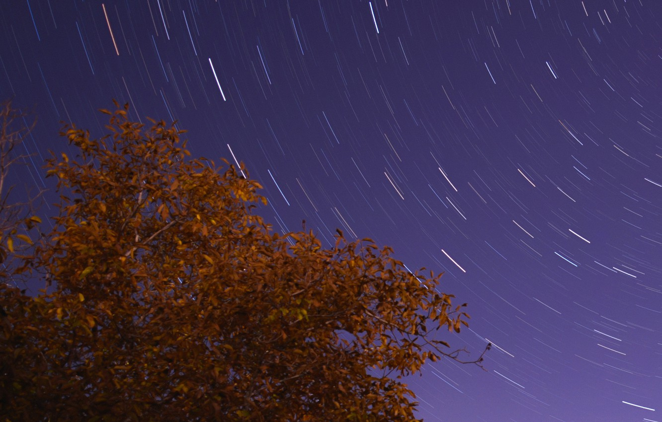 Photo wallpaper space, stars, night, tree, stairtrails