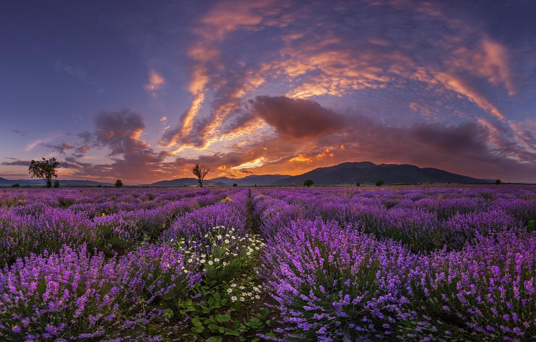 Photo wallpaper sunset, flowers, mountains