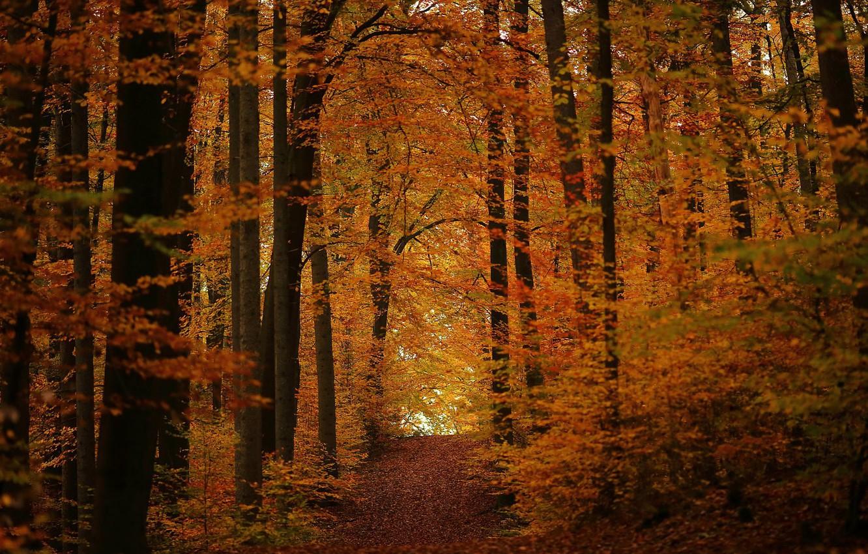 Photo wallpaper autumn, forest, track, November