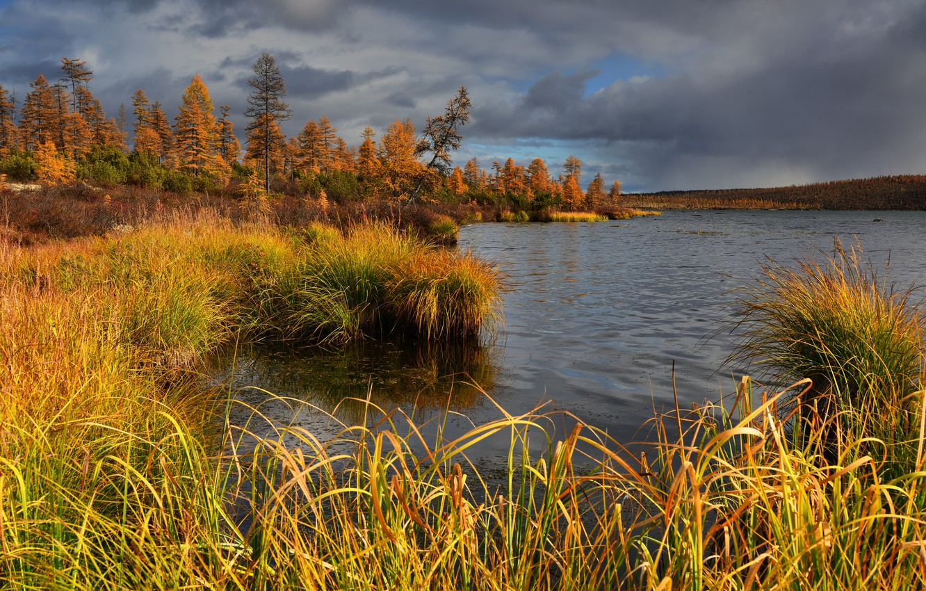 Photo wallpaper autumn, grass, trees, landscape, clouds, nature, lake, vegetation, forest, Kolyma, Maxim Evdokimov