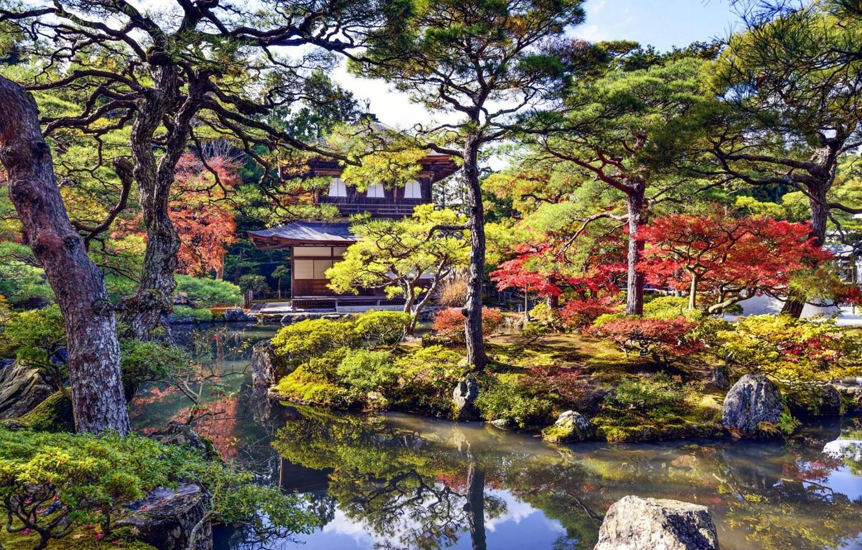 Photo wallpaper trees, house, Park