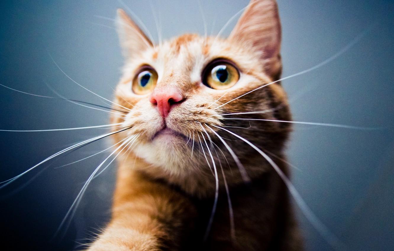 Photo wallpaper Wallpaper, Cat, Mood, Animal, Vibrissae