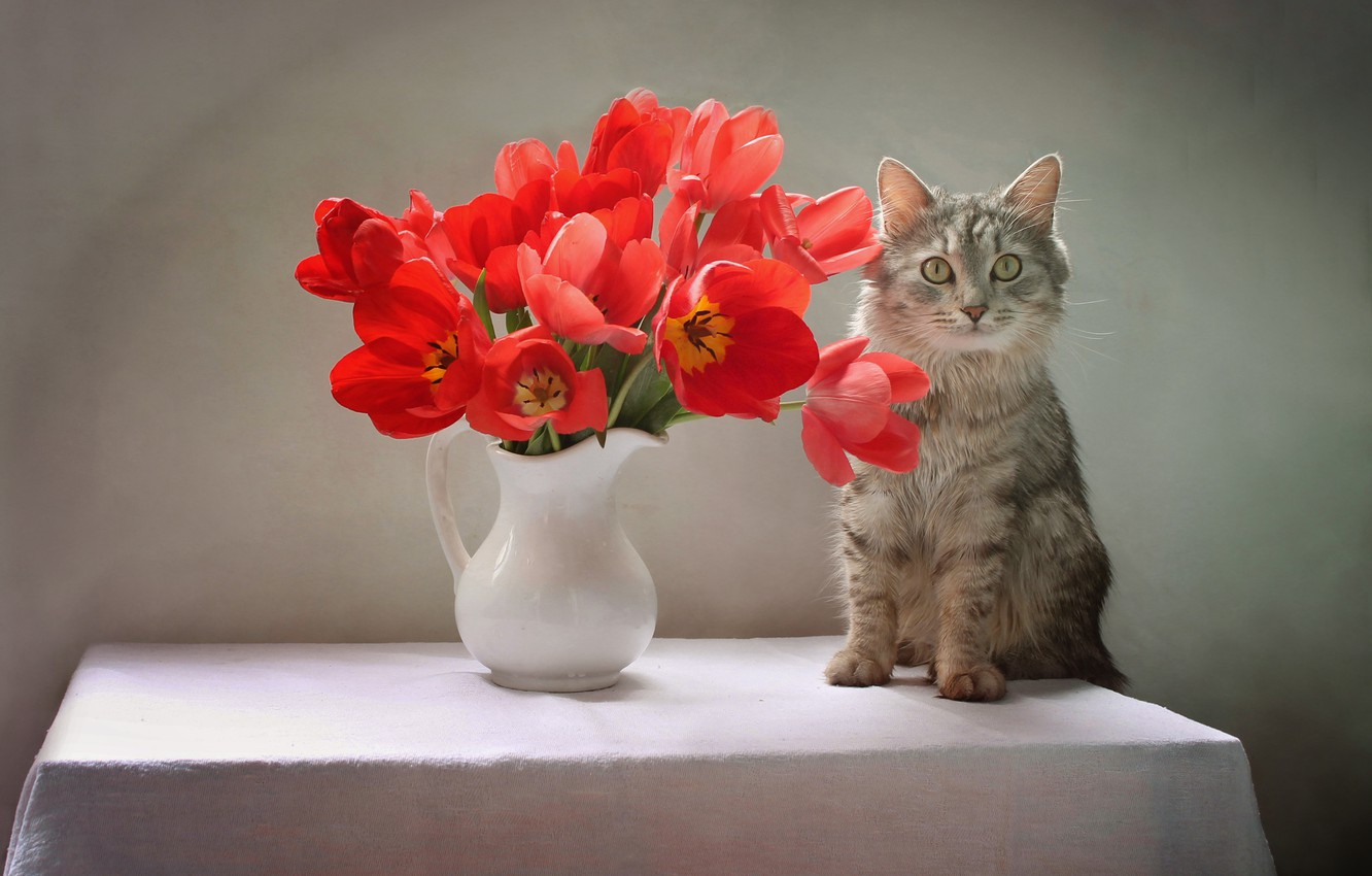 Photo wallpaper cat, cat, flowers, table, animal, tulips, pitcher, Kovaleva Svetlana, Svetlana Kovaleva