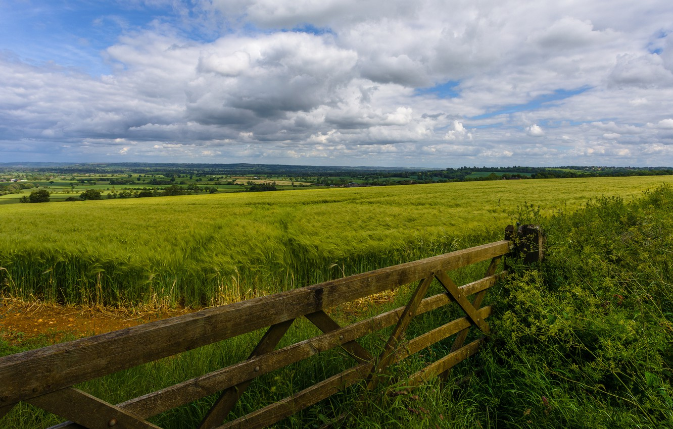 Photo wallpaper field, summer, clouds, landscape, Board, the fence, rye, the fence, ears, cereals, out of the …