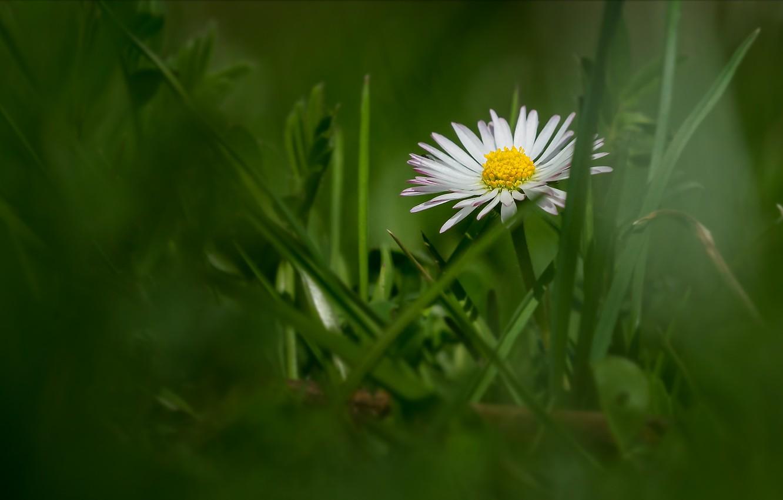 Photo wallpaper flower, grass, bokeh