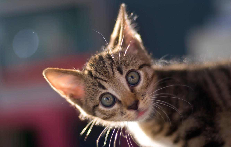 Photo wallpaper look, background, muzzle, kitty