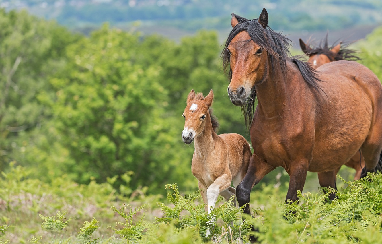 Photo wallpaper greens, summer, grass, face, trees, horse, two, horses, baby, horse, pair, walk, fern, mom, foal