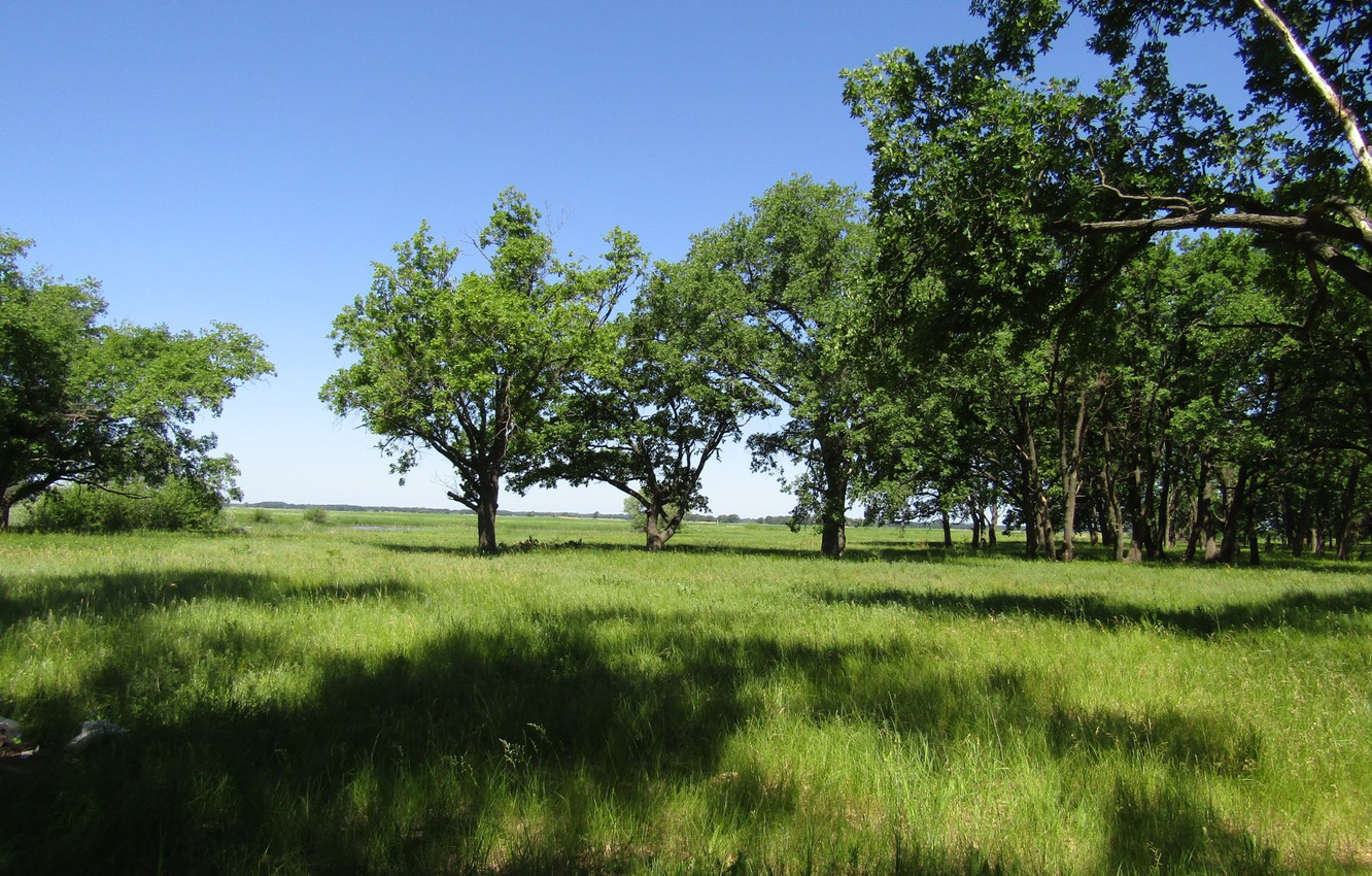 Photo wallpaper greens, field, forest, summer, the sky, grass, trees, nature
