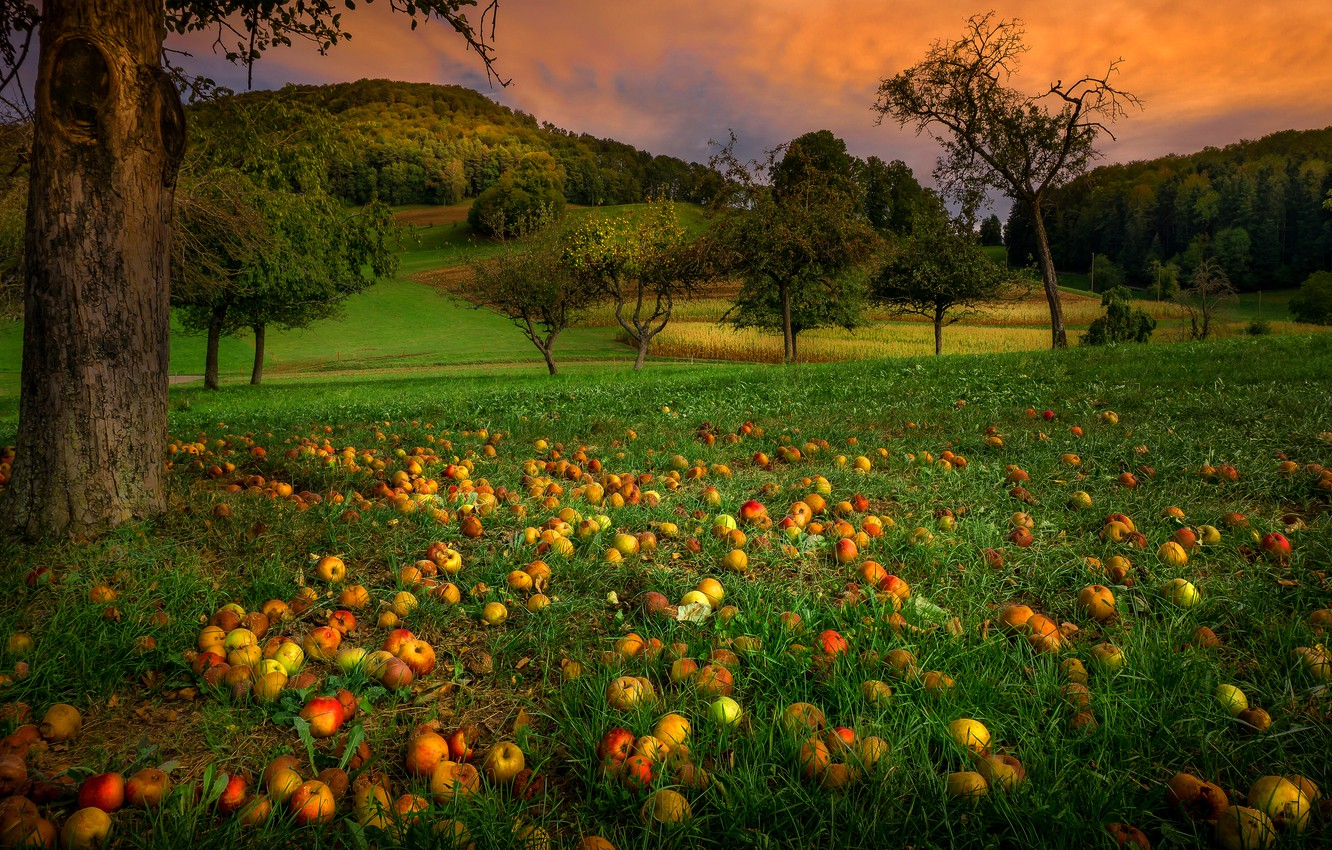 Photo wallpaper greens, autumn, summer, grass, clouds, trees, landscape, sunset, branches, Park, hills, glade, apples, the evening, …