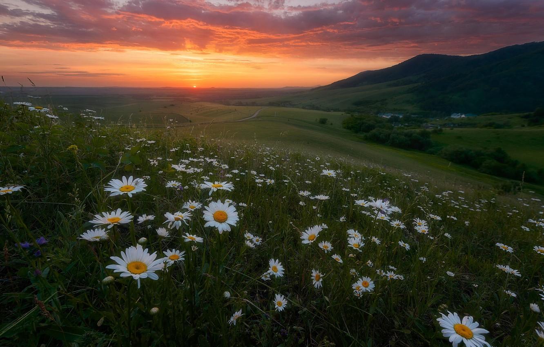 Photo wallpaper summer, landscape, flowers, mountains, nature, sunrise, dawn, chamomile, morning, meadows, Paul Kalinenko