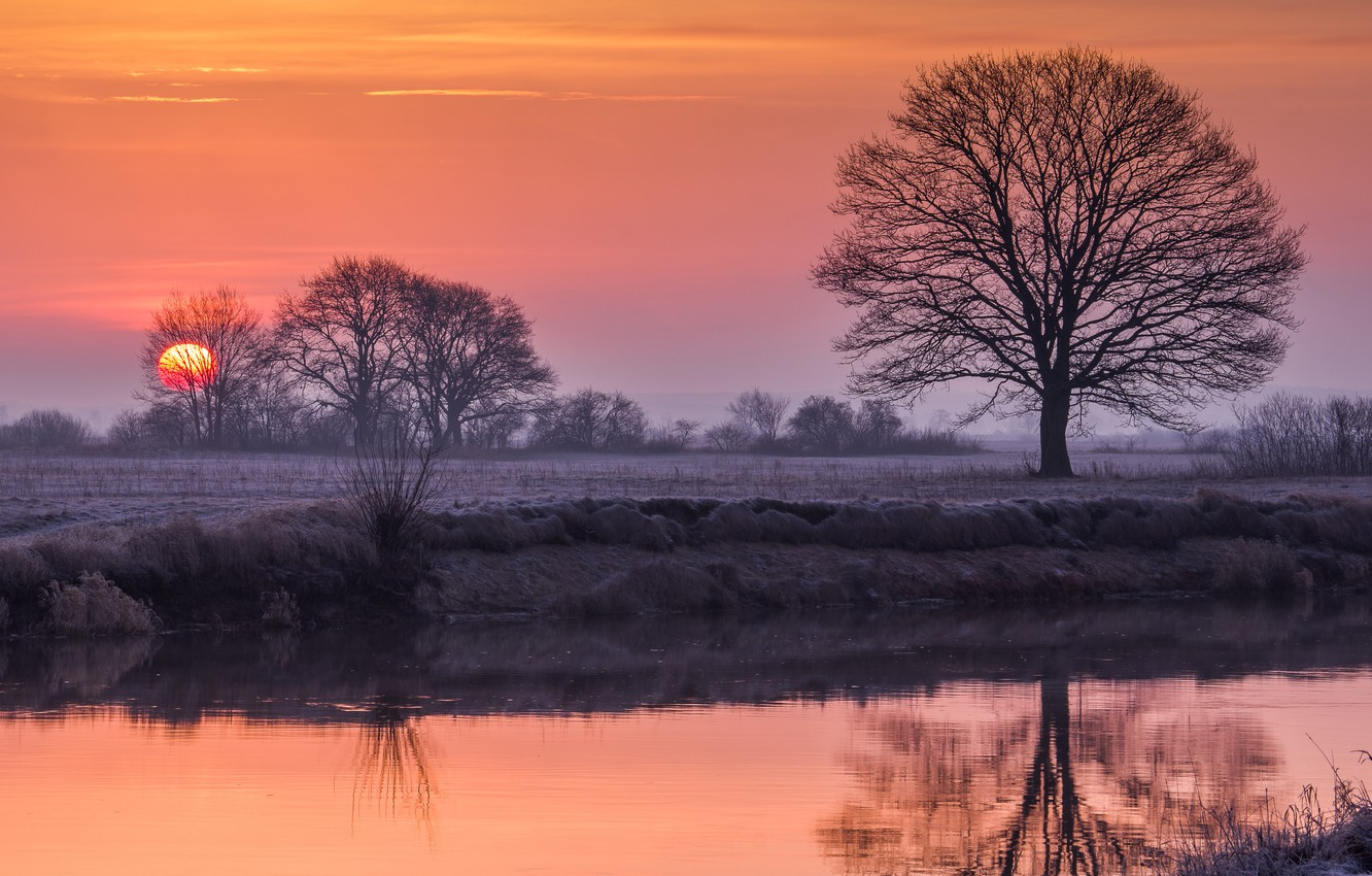 Photo wallpaper sunset, river, tree, the evening