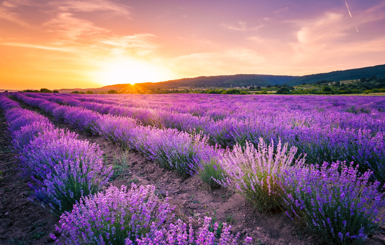 Photo wallpaper field, summer, the sky, sunset, flowers, Lavender