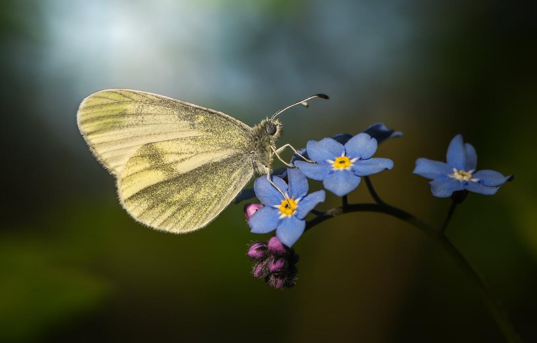 Photo wallpaper macro, butterfly, flowers