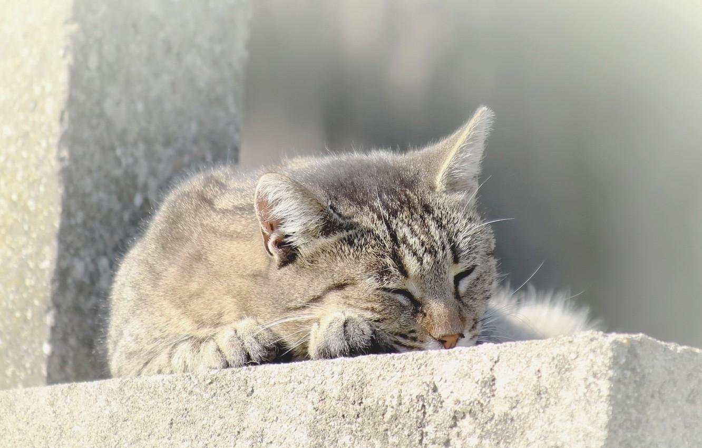 Photo wallpaper cat, comfort, background