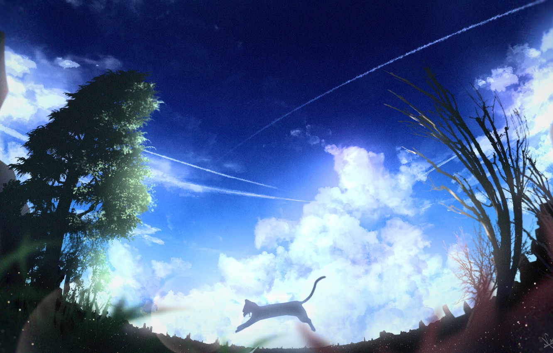 Photo wallpaper cat, summer, the sky, clouds, nature, jump