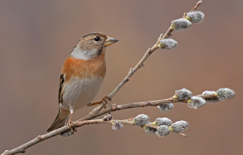 Photo wallpaper bird, branch, spring, kidney