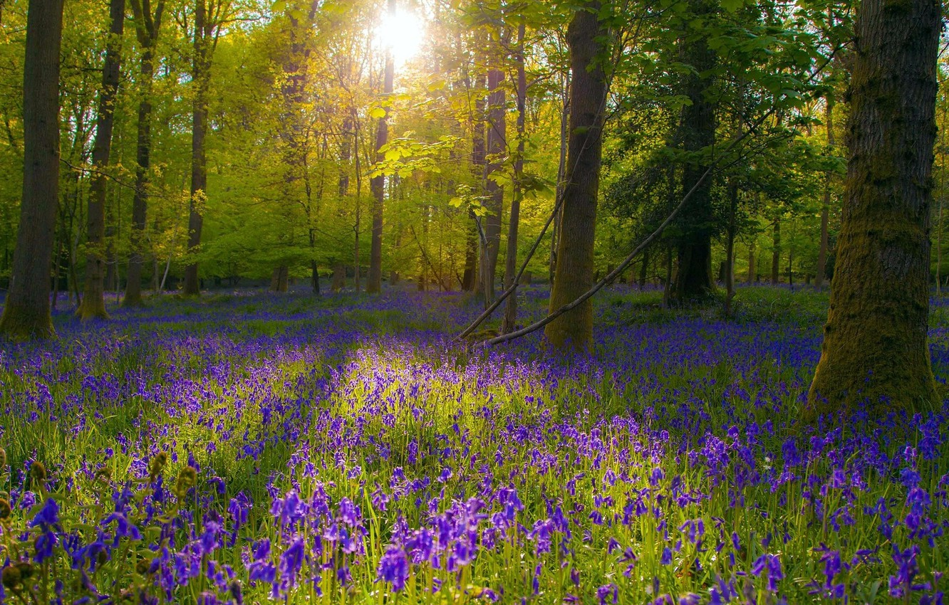 Photo wallpaper forest, flowers, nature