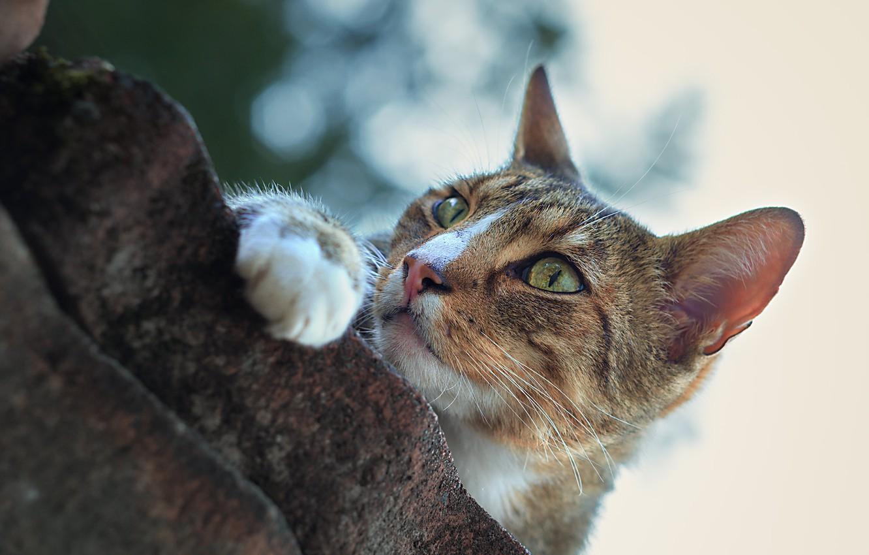 Photo wallpaper cat, cat, look, stones, muzzle, foot, cat