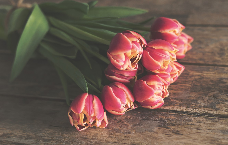 Photo wallpaper flowers, Board, bouquet, tulips, red, lie