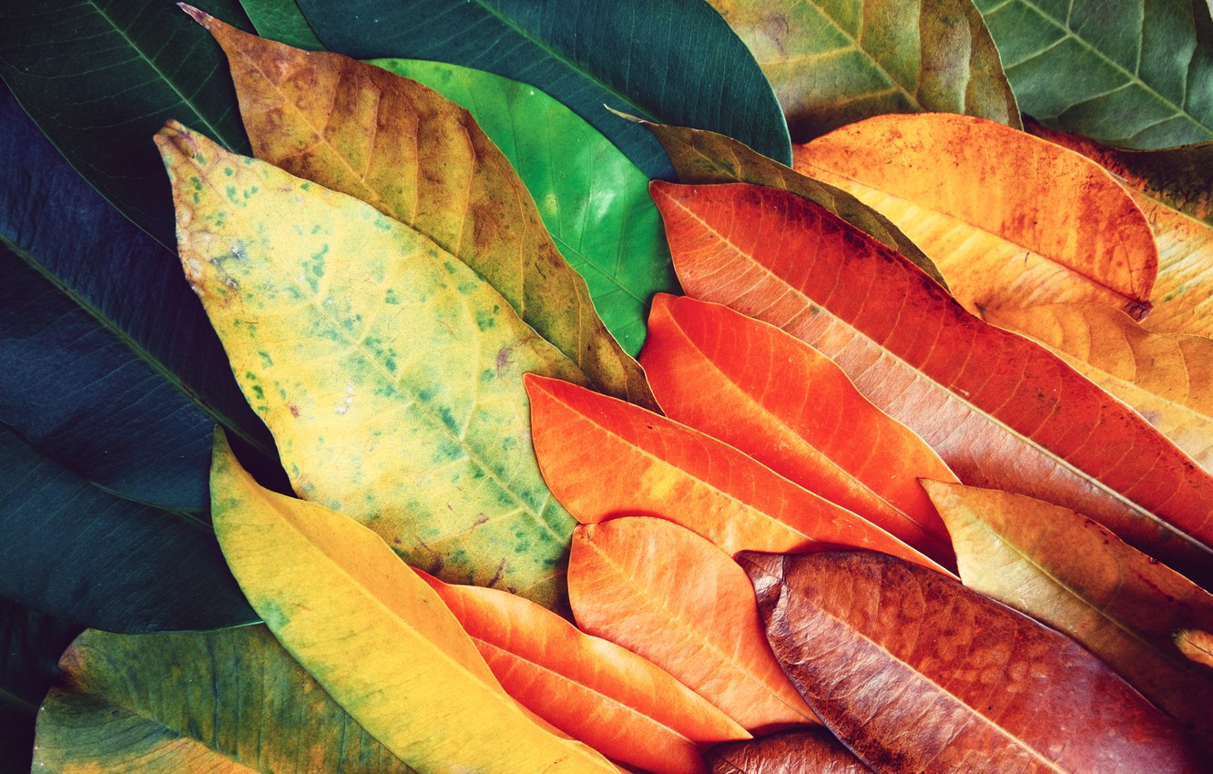 Photo wallpaper leaves, background, colorful, texture, background, leaves